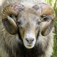 photo of listed ram