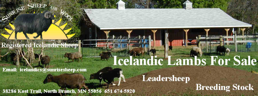 Lambs For Sale Header