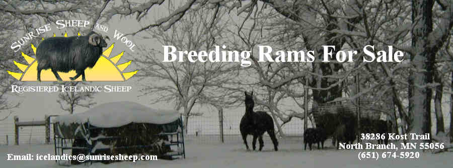 Breeding Rams For Sale Header